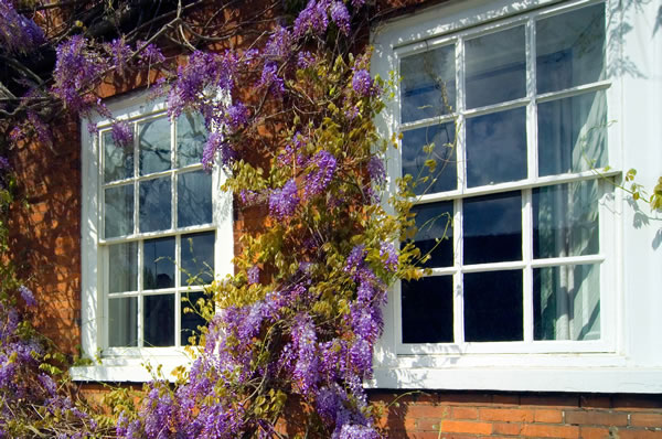 New and replacement sash windows